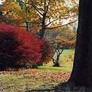 Autumn Arrives by kkphoto1
