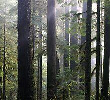 Hewitt Grove, Opal Creek Ancient Forest, Oregon by Allan  Erickson