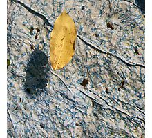 the leaf.. Photographic Print