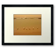 brown out.... seagull squadron Framed Print