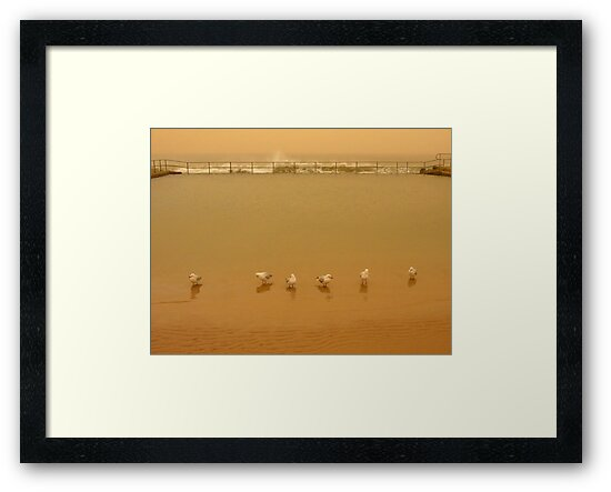 brown out.... seagull squadron by Juilee  Pryor