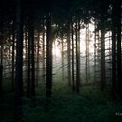 Deep in the woods by Olav Lunde