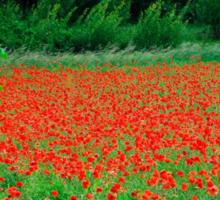 Poppy Field Sticker