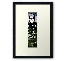 Greenhouse Framed Print