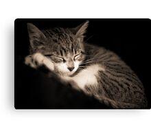 The Kitten Canvas Print