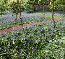 bluebells by Simon Yeomans