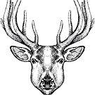 Deer by beanarts