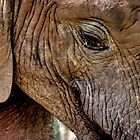 AFRICAN ELEPHANTS BY ERIKA GOUWS by Erika Gouws