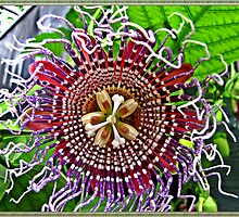 """ Passion Flower"" by Malcolm Chant"