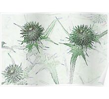 Green thistle Poster