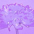 Purple dahlia by Sandra O'Connor
