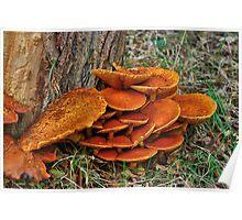 Fungi around the trunk Poster