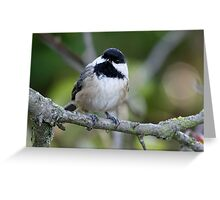 Black-Capped Chickadee With a Well-Suited Perch Greeting Card
