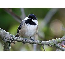 Black-Capped Chickadee With a Well-Suited Perch Photographic Print