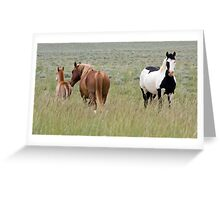Wild Pinto Stallion, Red Desert Greeting Card