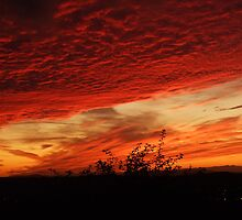 Sunset Silhouette by Darron Palmer