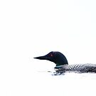 White water - Common Loon by Jim Cumming