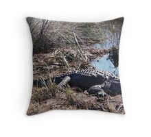 Sunning Gator Resting.... Throw Pillow