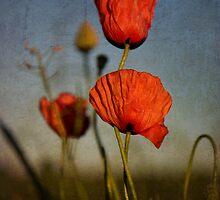 Poppies by Kasia Fiszer