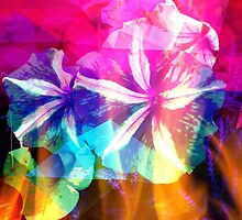Fancy Pansy Candy by CarolineEvans