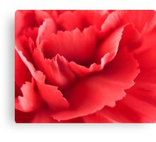 Red carnation Canvas Print
