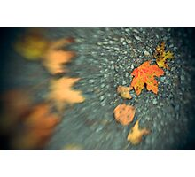 (Early) Autumn Leaves Photographic Print
