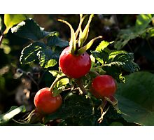 Juicy Red Rose Hips Photographic Print