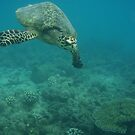 Swimming turtle by Jacquiyeo