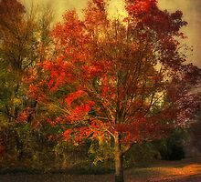 Autumn Maple by Jessica Jenney