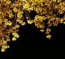 Golden Slumbers by Amanda Anne Reilly