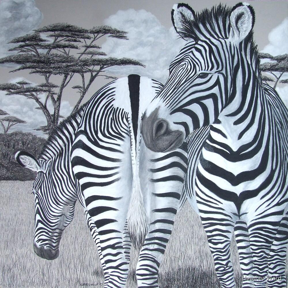 Grazing - Grevy's Zebras by Heather Ward