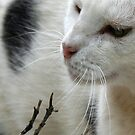 Close Up Of A Piebald Cat by taiche