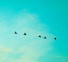 Wild Ducks Flying Forwards by Luci Cadman