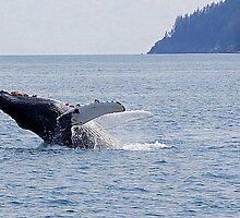 laid back... humpback breach by Bob Moore