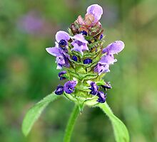 Self Heal with Personality by alienfunk