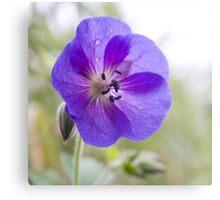 Violet passion Canvas Print