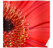 Red daisy Poster