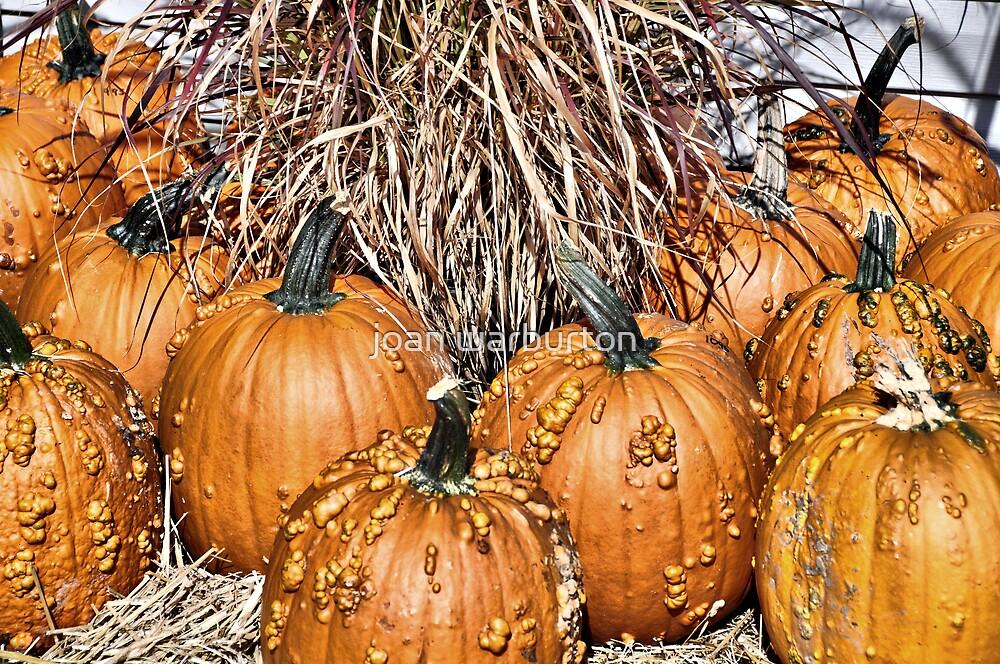Pumpkin Patch by joan warburton