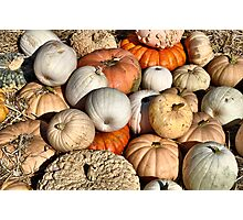 Gourds And Pumpkins Photographic Print