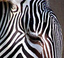 Zebra Eye by GolemAura