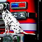 Firehouse Dog by Tera Asboe