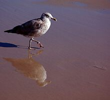 Seagull by Jackie Fink