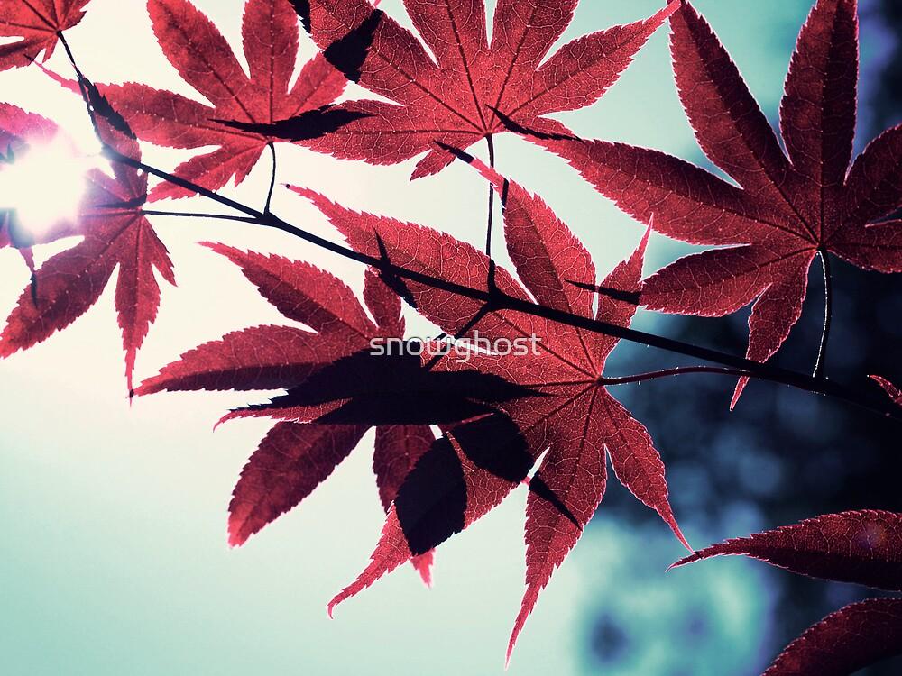 maple, japanese by sabrina card