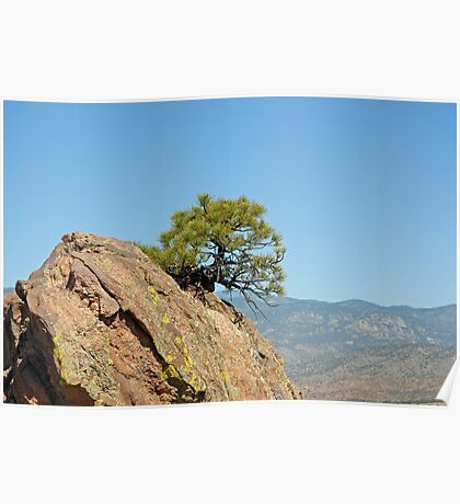Shrub and Rock at Canon City  Poster