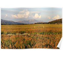 Glowing Meadow Poster