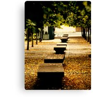 benches, leaves and trees Canvas Print