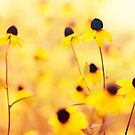 Summer Yellow by BryanLee