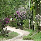 Country road by Esperanza Gallego