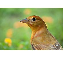 Female Summer Tanager Photographic Print