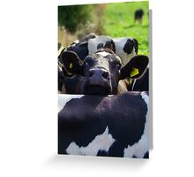 OY! ...whaddya think of these earings mate? Greeting Card